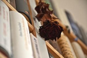 Buchhändler-Rose