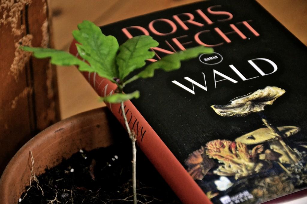 Doris Knecht: Wald