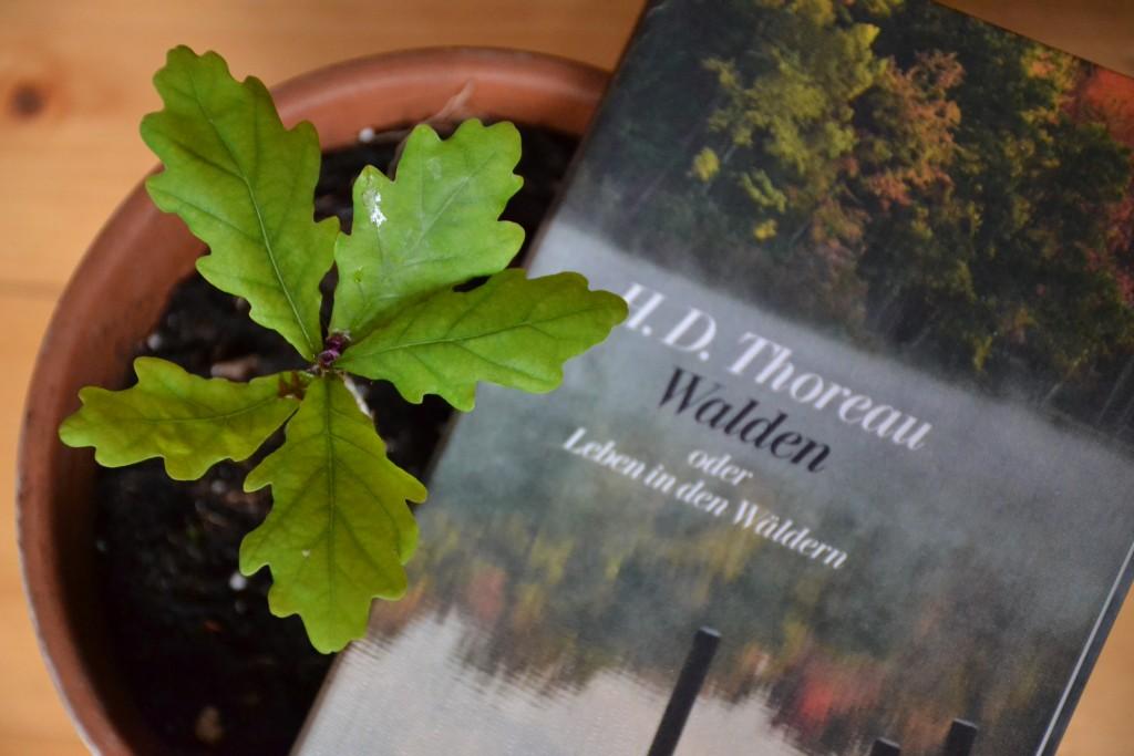 Thoreau, Walden