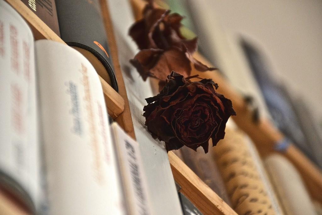 Die Buchhändler-Rose